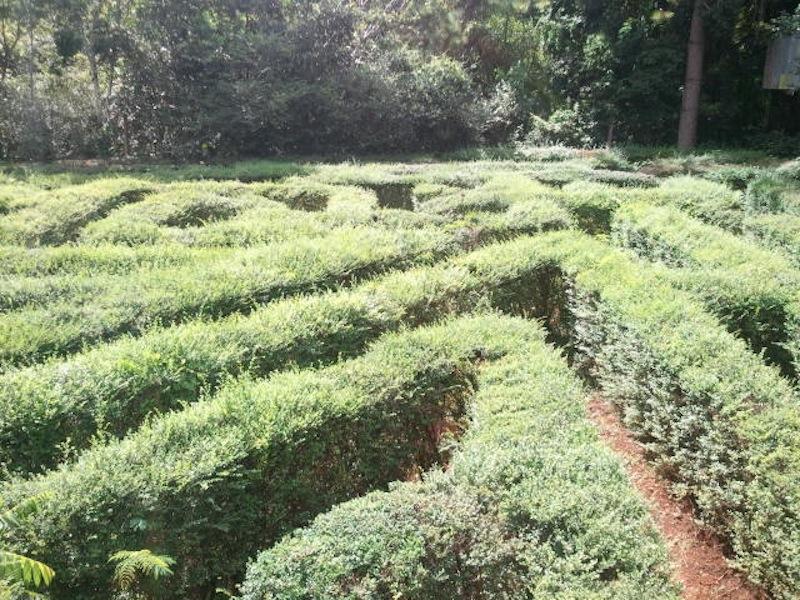 Naturlabyrinth