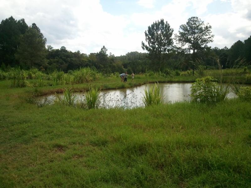 Einer der Seen von Eugen