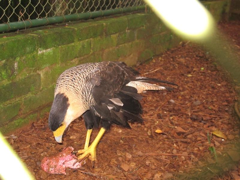 Futter für den Adler