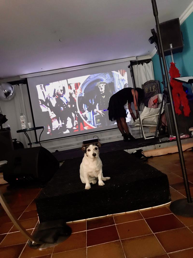 Sängerausbildung - POWERVOICE-Rocky Horror Picture Show